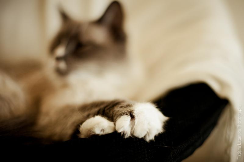 Жизель. История одной кошки