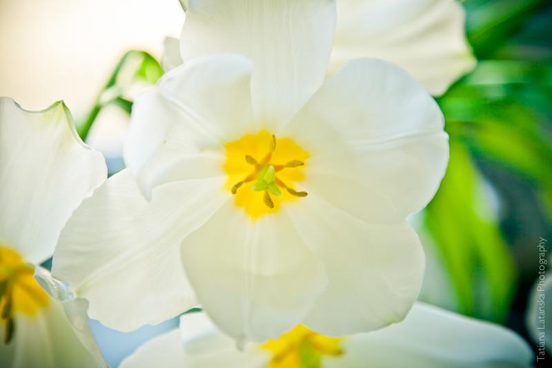 Фото Татьяны Латанской, Весна