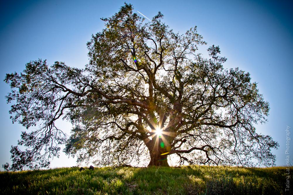 Фото Татьяны Латанской «Дерево Жизни»