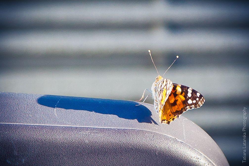 ЮАР. Дурбан. Фото Татьяны Латанской.