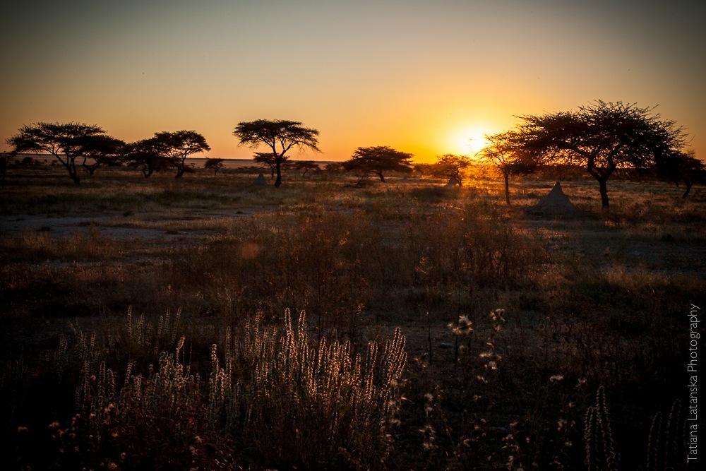 Намибия. Сафари. Фото Татьяны Латанской.