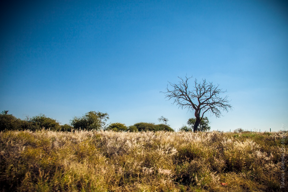 Намибия. Фото Татьяны Латанской.